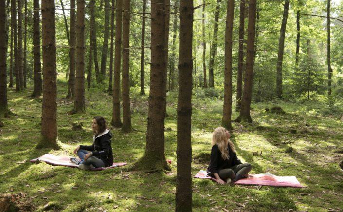 Wie der Wald uns gesund und glücklich macht